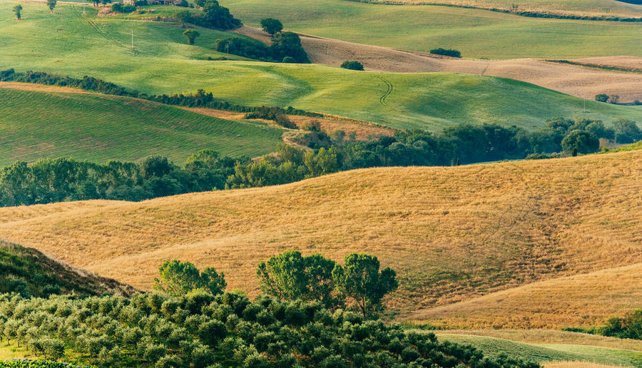 Tuscan Hillside Calm Farmland Field Hills Nature Rolling Hills Tuscany Agriculture Beauty In Nature Day Field Fields Green Color Hillside Italy Landscape Nature No People Outdoors Patchwork Landscape Rural Scene Scenics Tranquil Scene Tranquility Tree