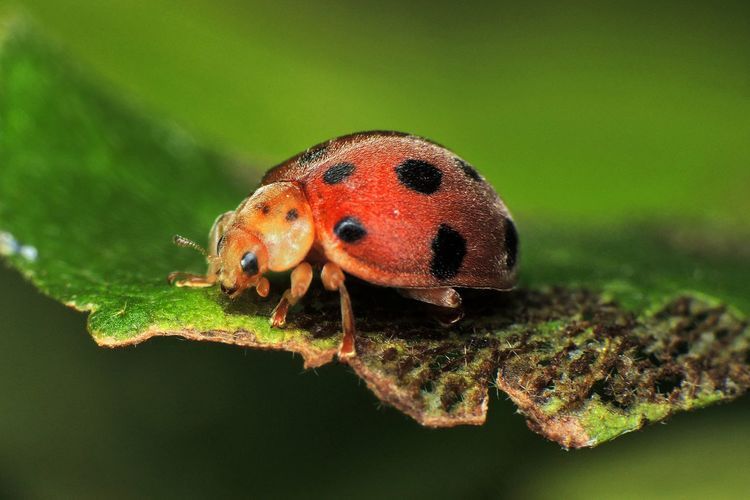 Animal Wildlife Insect Green Color Ladybug Close-up Beetle Nature Plant Plant Part Leaf Animals In The Wild Animal Themes Eye4photography  EyeEm Best Shots Light And Shadow Hello World Bug