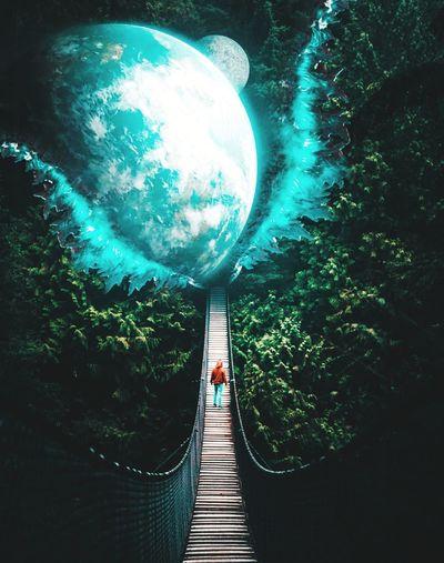 Rear view of man on footbridge against trees