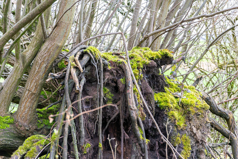 Nature Strange Tree Tree Tree Trunk Beauty In Nature Branch Moss Strange Tree Growth