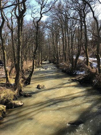 Springtime Swedish Nature Sweden Frösakull Tylösand Tree Plant Nature Water Sunlight Beauty In Nature No People Tranquility Day Scenics - Nature Forest Idyllic Non-urban Scene Tranquil Scene Outdoors