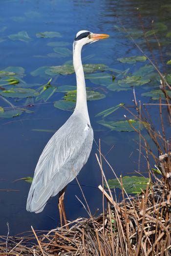 View of a bird at lakeshore