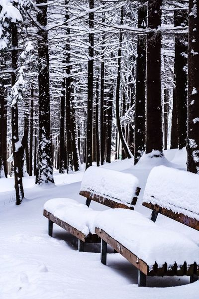 Snow Cold Temperature Winter No People White Color Outdoors Benches Snowing Trees Day Nature New Year New Life Happy