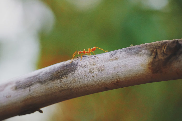 Close-up of ant on tree