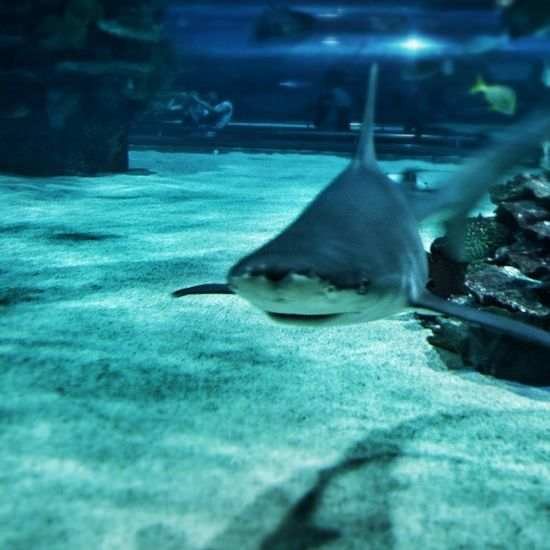 Egy kis lazulás. Tropicarium Campona Budapest Hungary Shark Ig Ighun Instamood Instagram Googlephotos