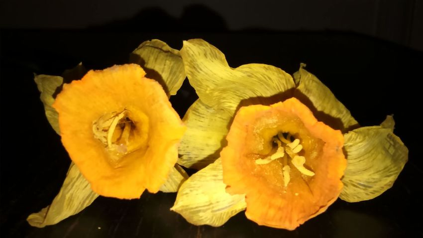 Night Shot Night Photography Petals Yellow Flowers Nature_collection Nature Flower Life Botany Flower Collection Two Flowers Wilting Flowers Dying Flowers Yellow Flowers Daffodils Spring Flowers