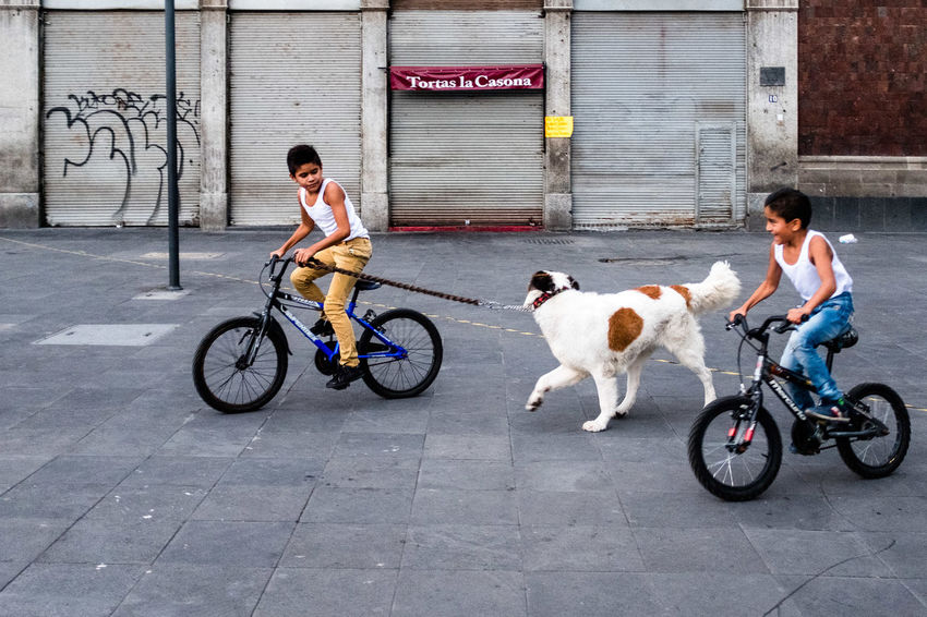 A candid street in Mexico City Biking Ciudad De México Dogs Dogs Of EyeEm EyeEm Best Shots Kids Kids Being Kids Mexico Mexico City Bicycle Bike Canine Cdmx City Dog One Animal Playing Real People Riding Two People Week On Eyeem Human Connection