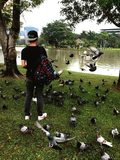 surrounded by pigeons