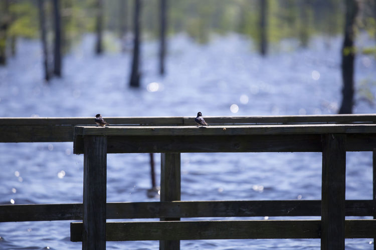 Birds perching on railing against lake