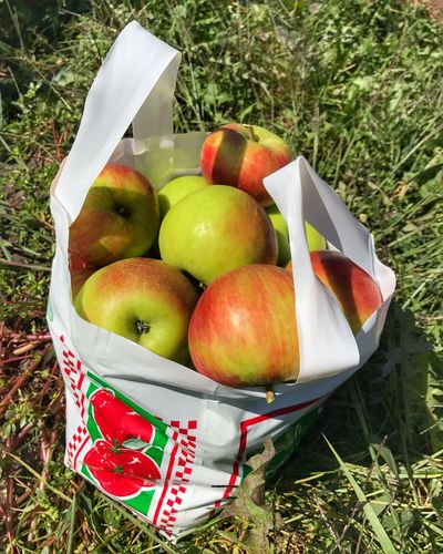 Apples Apple Honeycrisp Honeycrisp Apples Ferguson's Apple Orchard Fruit Grass Apple - Fruit High Angle View Healthy Eating Green Color Red Food And Drink Freshness Eat Local Outdoors Food Nature No People Close-up