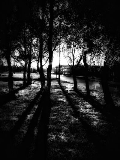 Silhouette trees in park