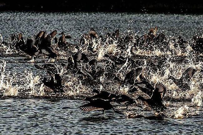 """Sırf biz insanlardan korkuyorlar diye adlarını böyle koyduk. """"Vahşi yaşam"""" diye adlandırdıkları doğaya vahşi değil mi """"insan""""? Just because we are afraid of people that have put their names called. """"Wildlife"""" he is not wild nature Is that what they call """"human""""? İsmail Balı © 2015 Kocaeli Turkey Ismailbalıphotography Moment O_an Lake Wild Life Wildlife Wildlifephotography Perfect Birds Ornithology  Fear Others Population Natgeo Nikon Nikond610 Zoom Light Art @natgeoyourshot @natgeotvturkiye @natgeo @natgeoturkiye"""