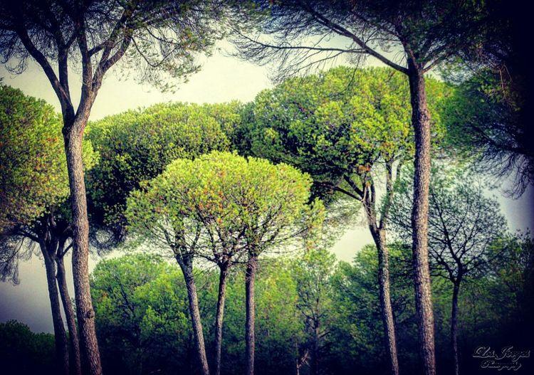 Parque Nacional De Doñana Doñana Almonte Huelva Estaes_huelva SPAIN Andalucía España