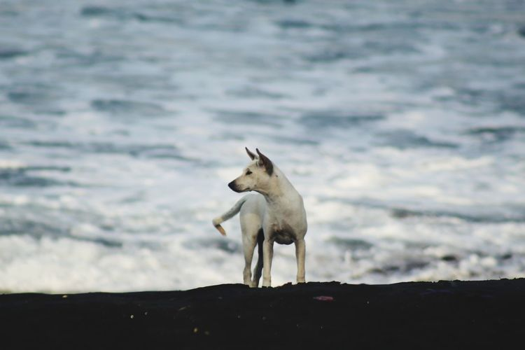 White dog standing in water