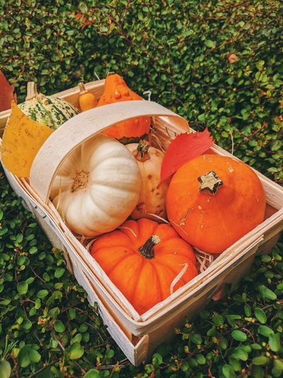High angle view of pumpkin on field