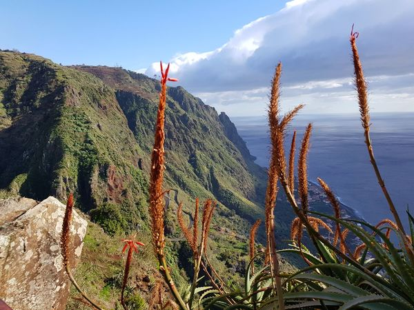 Cloud - Sky View From Above Paul Do Mar Mountain Range Bildfolge Photography Landscape_Collection Landscape_photography Tranquility Scene Vacation Time Madeira Island Succulents Growth Plant Nature No People Outdoors Landscape Sky Mountain Day Tranquility Tranquil Scene Beauty In Nature Scenics