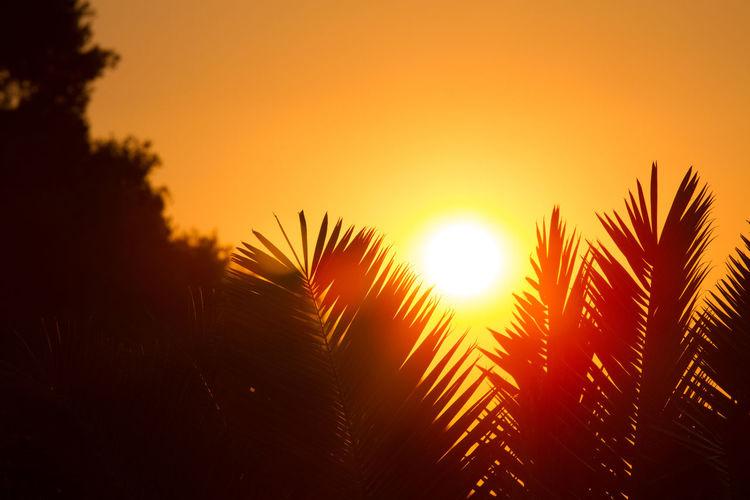 Silhouette palm trees against bright sun