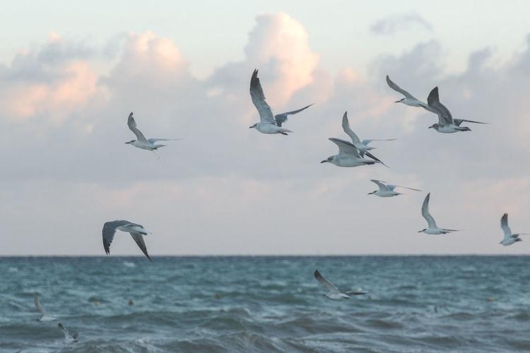 Flock of seagulls flying over sea against sky