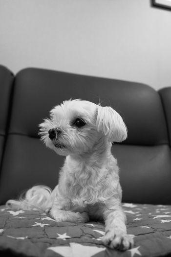 Dog sitting on sofa