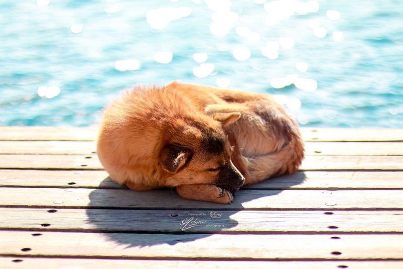 泸沽湖畔的中华田园犬😘 Dog Taking Photos Lake Pets