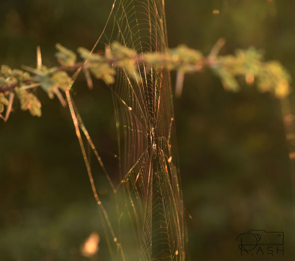 Spiderweb Colors Green Yellow Oneofmyfavorites Randomshot Tholbirdsanctuary Ahmedabaddiaries 🙆