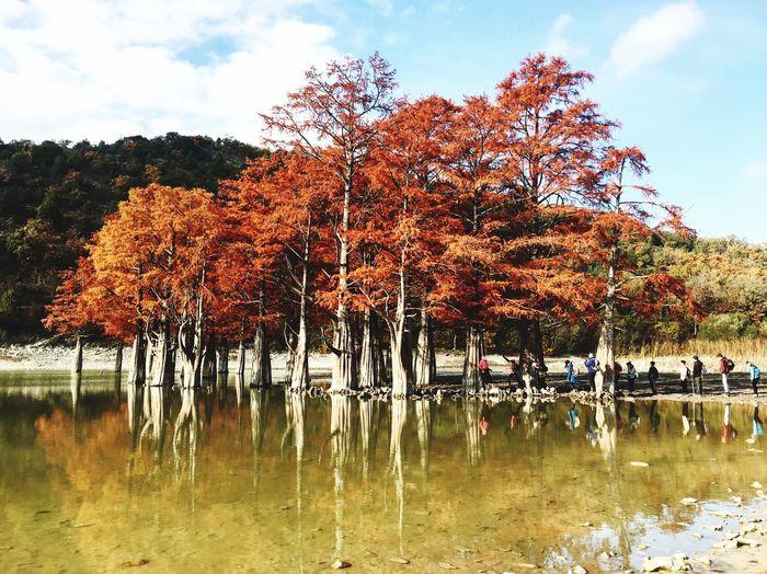 Beauty In Nature Tree Nature Beauty In Nature Sky Water Succo Anapa Cypress Lake Lake