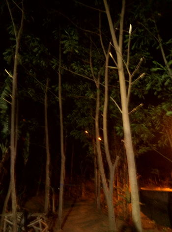 Night view Cellularphotography Meizuindonesia Meizuphoto Meizum3s Indonesiabanget Trawas Nightphotography Tree Latepost Tree Illuminated Tree Area Forest Spooky Black Background Mystery Pine Tree Palm Tree Landscape