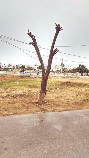 A tree in season