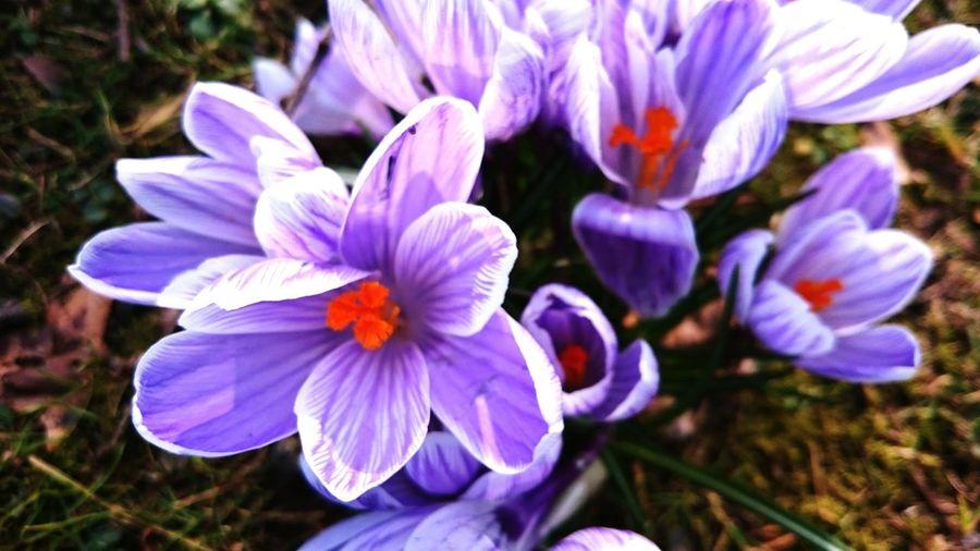 Spring Into