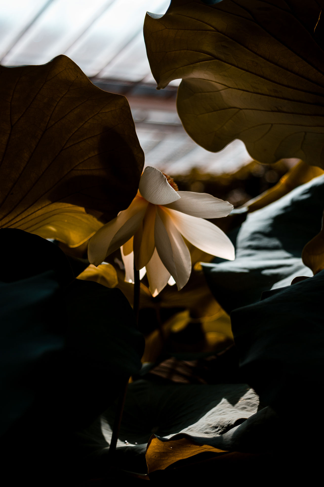 flowering plant, plant, flower, petal, beauty in nature