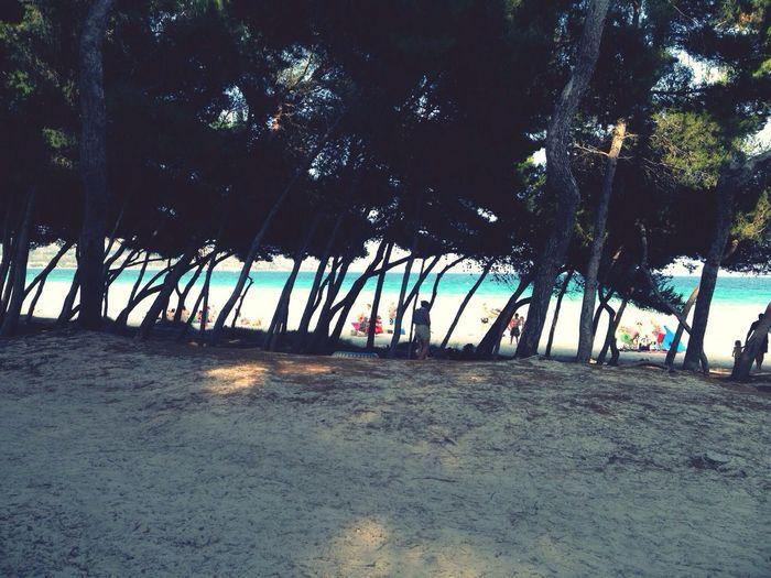 Beach Summer Ocean Nature