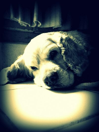 Myall ❤️ DogLover❤💓💜🐾 Myson I Love My Dog Pet Photography  Mybeautifuldog Heart ❤ Dog❤ Pets Corner Creative Light And Shadow