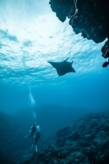 View of scuba diver in sea