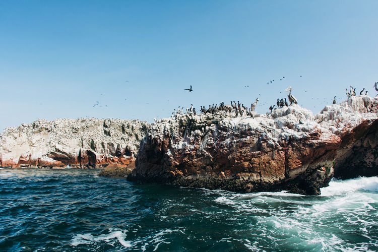 View Of Cormorants On Rocky Shore
