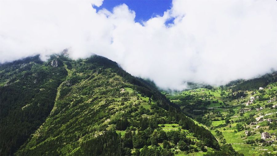 Turkey Trabzon Turkey  Trabzon Çaykara Karacam Plant Beauty In Nature Green Color Growth Tree Sky Cloud - Sky Tranquility Nature No People Scenics - Nature Non-urban Scene Low Angle View Day Tranquil Scene Land Environment Outdoors Foliage Lush Foliage