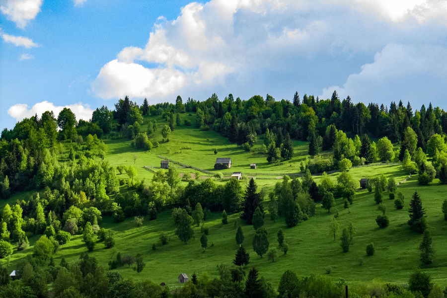 Hillside in the Carpathian Mountains in Transylvania with shepherd shelter Beauty In Nature Carpathian Mountains Carpathian Nature Carpathians Cloud - Sky Day Green Color Landscape Lush - Description Lush Foliage Mountain Nature No People Outdoors Romania Rural Scene Scenics Tranquil Scene Tranquility Transylvania Tree