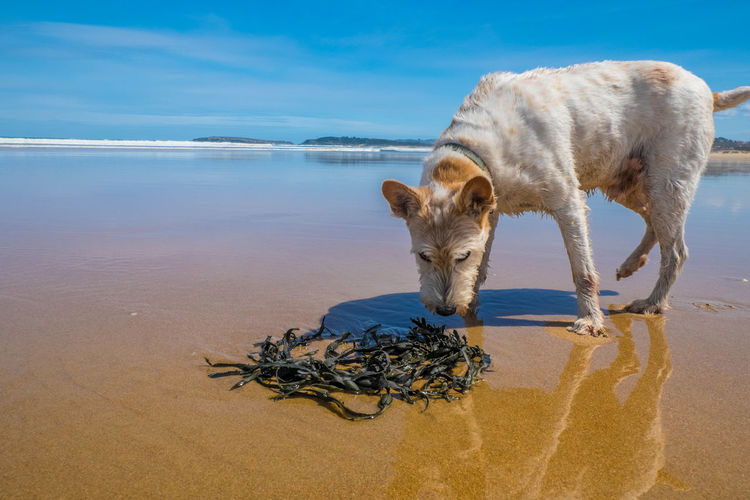 Animal Themes Beach Day Dog Dogs Of EyeEm Domestic Animals Horizon Over Water Nature No People One Animal Outdoors Reflection Sand Sea Water The Street Photographer - 2017 EyeEm Awards EyeEmNewHere My Best Photo