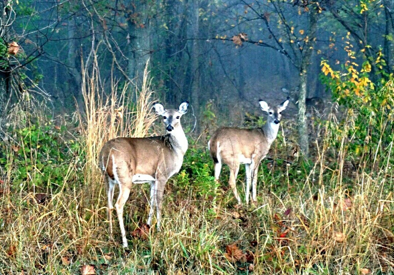 animals in the wild, animal wildlife, animal themes, deer, day, nature, grass, forest, no people, young animal, outdoors, mammal, tree