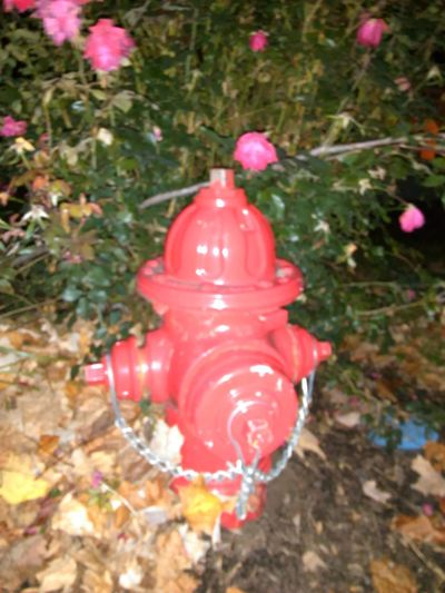 Fire Hydrant 🔥