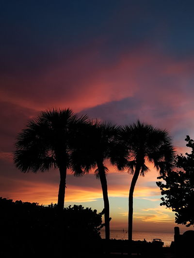 Sunset Nature Orange Color Tree Landscape No People Space And Astronomy Sky Beauty In Nature Silhouette Night Scenics Galaxy Star - Space Outdoors Nature Reserve Astronomytook this on holiday in florida.