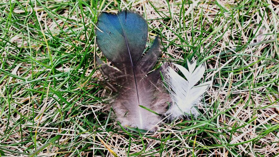 Two Feathers. Freshness Capture The Moment Nature Is Art Enjoying Life No People
