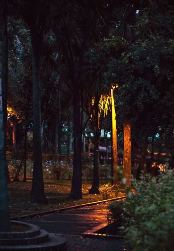 View of trees at night