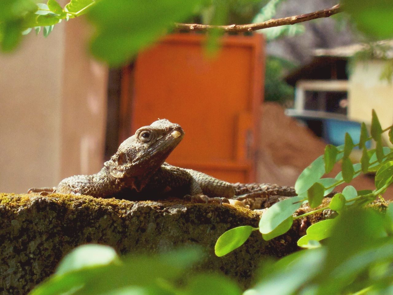 selective focus, animal themes, reptile, animals in the wild, lizard, one animal, animal, animal wildlife, no people, vertebrate, day, nature, plant, close-up, plant part, leaf, built structure, green color, architecture, outdoors