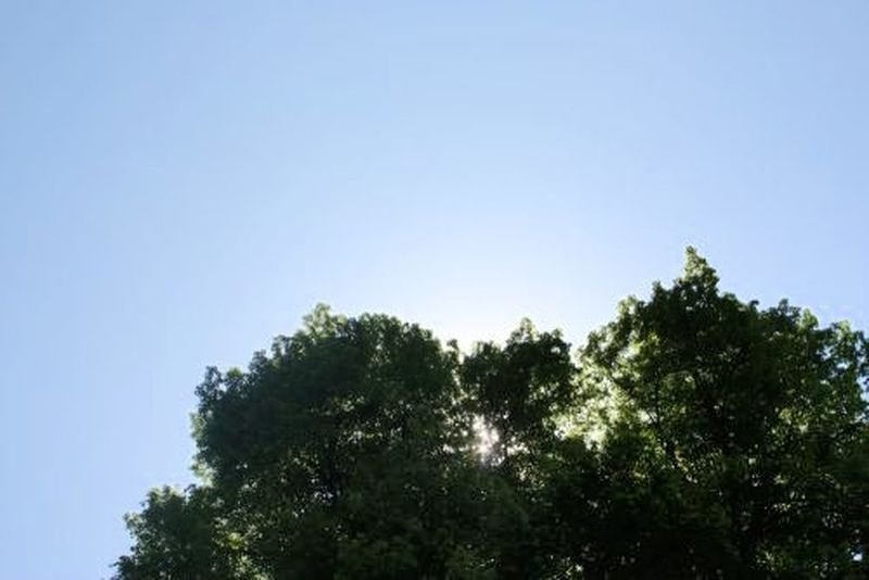 Summertime Summer Sunny Day Tree_collection  Tree Enjoying Nature Enjoy The Moment Blue Sky Relaxing Moments Touch The Sky