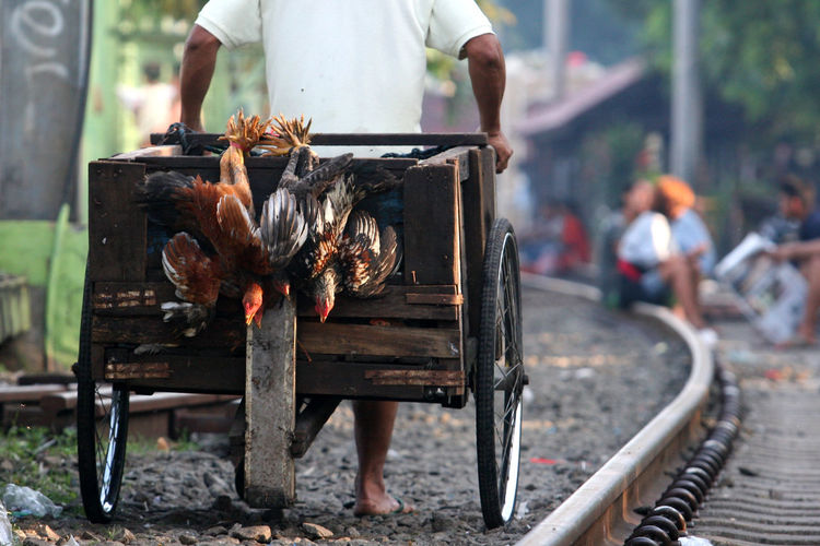 Man Carrying Chicken by Wagon Animal Animal Themes Barbecue Grill Chicken Color Image Focus On Foreground For Sale Human Body Part Human Hand INDONESIA Livestock Low Section Market Meat Outdoors Poultry Wagon