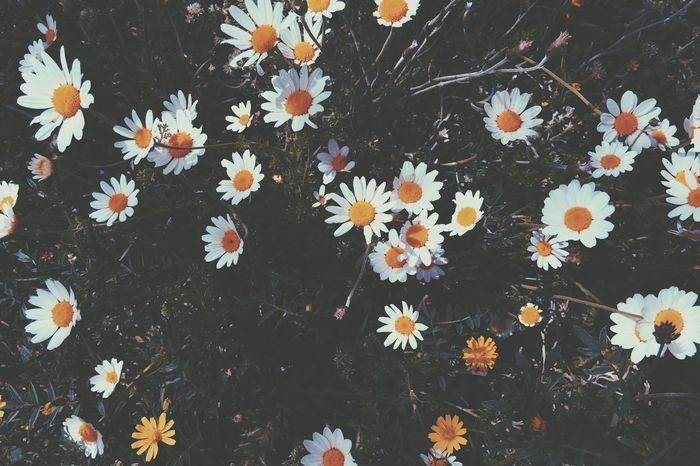 Vscocam Vscoflowers Flowers 🌼🌱🌼🌱🌼🌱🌼🌱🌼🌱🌼🌱