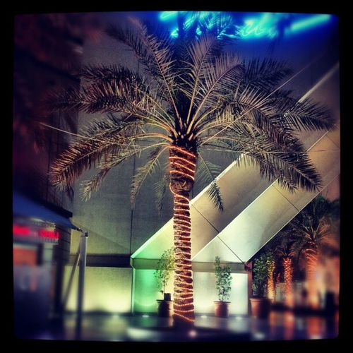 صورة نخلة الخبر المملكة العربية السعودية تصوير غالكسي اس 2 Photo Palm Khobar Saudi Arabia imaging Galaxy S