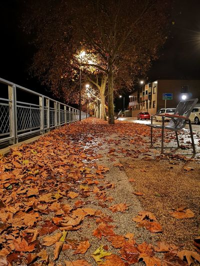 Sunlight falling on autumn leaves at night