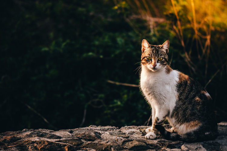 Cat on rock outdoors