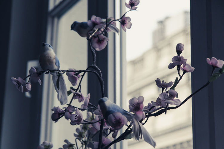 Cherry Blossoms Historical Building View From The Window... Architecture Bird Birds Building Exterior Built Structure Close-up Day Flower Focus On Foreground No People Window Handle Window View